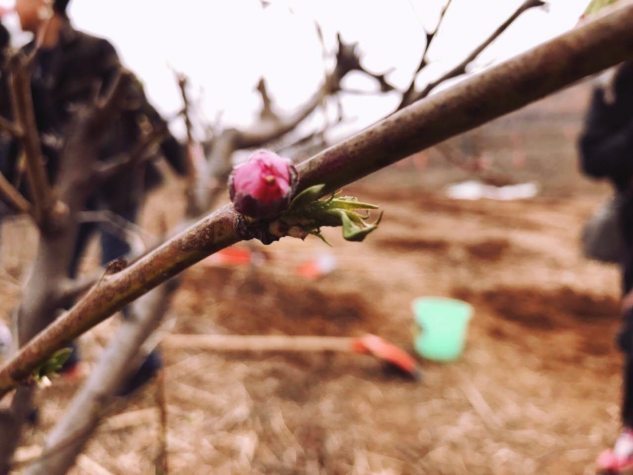 植树节| 春暖花开,我为蓝天出份力
